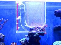 Световая ловушка для ловли личинок рыб и креветок в аквариуме