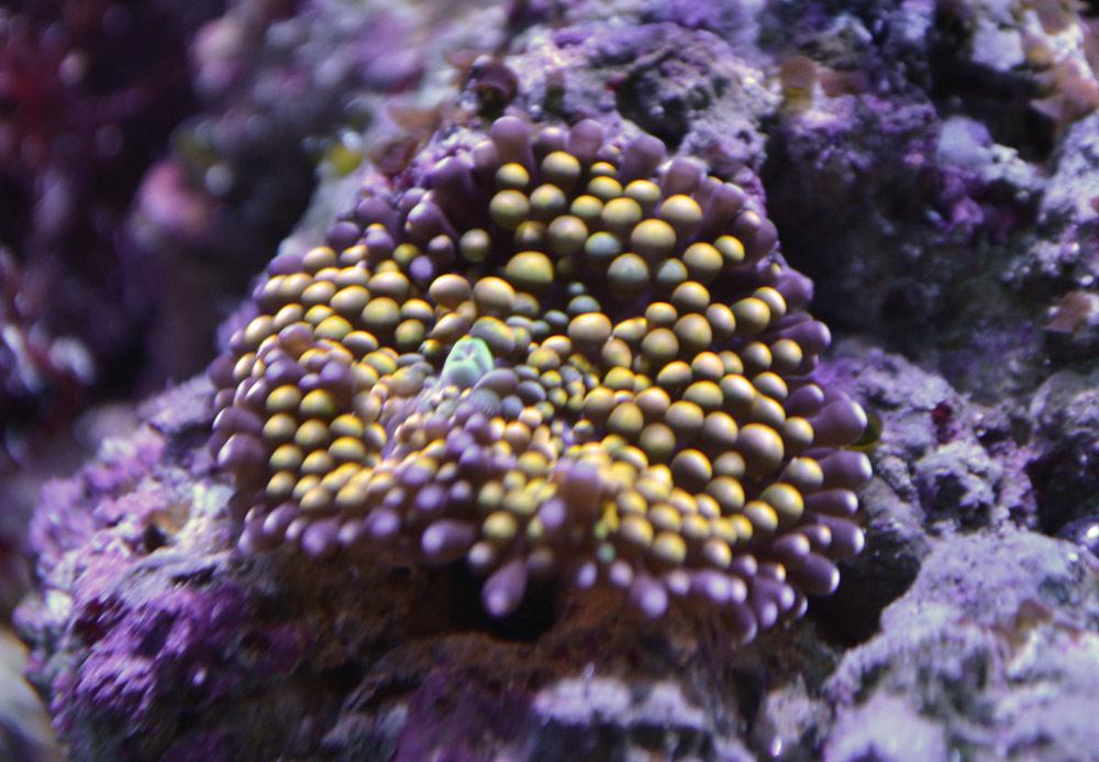 Как изготовить аквариум своими руками фото 447