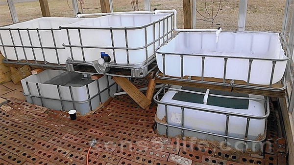 аквапоника в домашних условиях