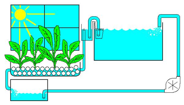 хорошего роста растений.