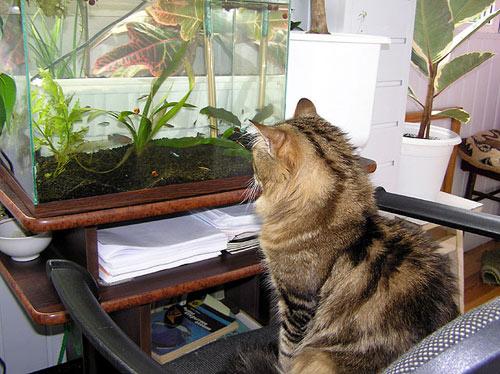 Удобрение для аквариумных растений своими руками фото
