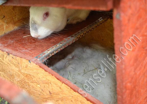крольчата в навесном маточнике