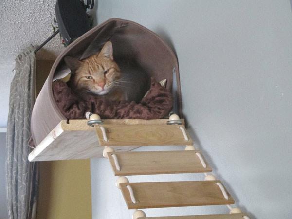 настенный домик для кошки своими руками