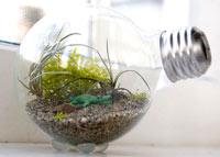 Как сделать маленький террариум в лампочке - лампотеррариум.