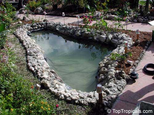 Строительство пруда на своем участке. Декоративный водоем. 6068