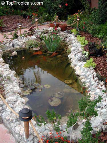 Строительство пруда на своем участке. Декоративный водоем. 6331